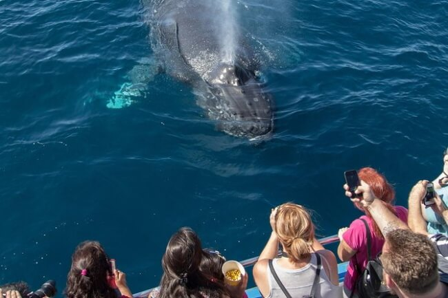 Set out on whale watching tour