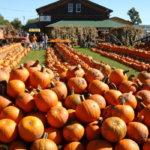 Top 5 Pumpkin Festivals of Canada